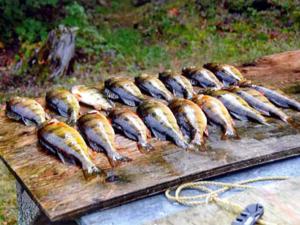 Robert Lake, table full of caught fish